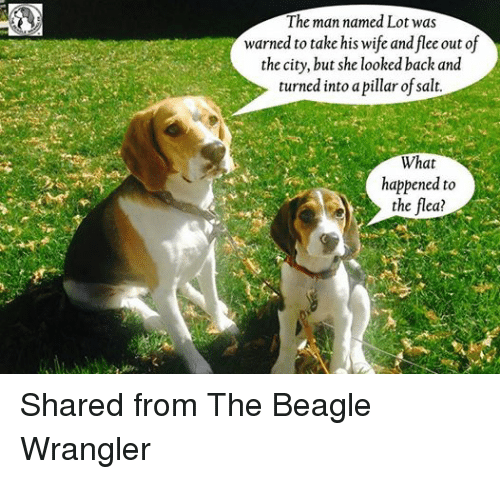 Episcopal Church : The man named Lot was  warned to take his wife and flee out of  the city, but she looked back and  turned into a pillar of salt.  What  happened to  the flea? Shared from The Beagle Wrangler