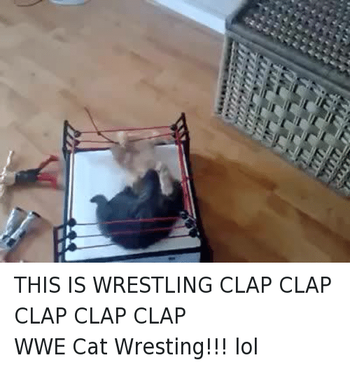 wrest: THIS IS WRESTLING CLAP CLAP CLAP CLAP CLAPWWE Cat Wresting!!! lol
