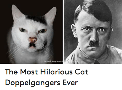 25+ Best Memes About Doppelganger and Grumpy Cat ...
