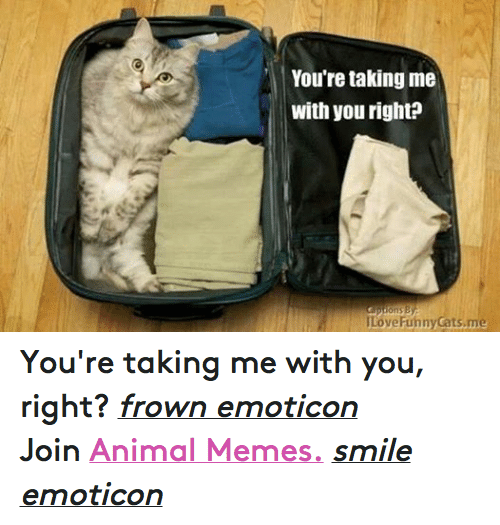 Meme Smile: You're taking me  with you right?  ILoveFunny Cats me You're taking me with you, right? frown emoticon  Join Animal Memes. smile emoticon