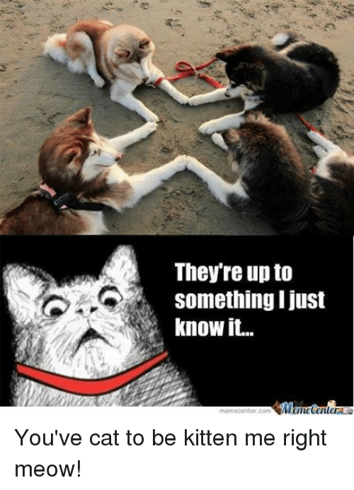 Cat To Be Kitten Me: They re up to  something I just  know it.  Memetenler You've cat to be kitten me right meow!