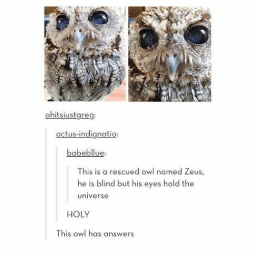 Funny: ohitsjustgreg:  actus-indignatio  babebllue:  This is a rescued owl named Zeus  he is blind but his eyes hold the  universe  HOLY  This owl has answers