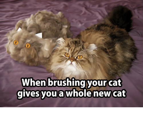 CyBeRGaTa - Mostly Cats, New Mexico & Memes — Poor Chibi ...