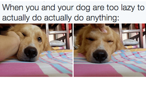 Dogs: When you and your dog are too lazy to  actually do actually do anything: