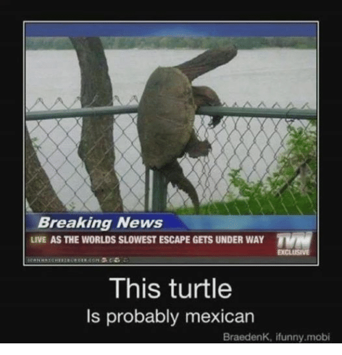 Mexican Word of the Day: Breaking News  LIVE AS THE WORLDS SLOWEST ESCAPE GETS UNDER WAY  TVN  EXCLUSIVE  This turtle  ls probably mexican  BraedenK, ifunny.mobi