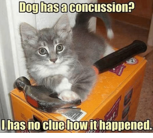 Dogs: Dog hasa Concussion?  has no cluehoWithappened.