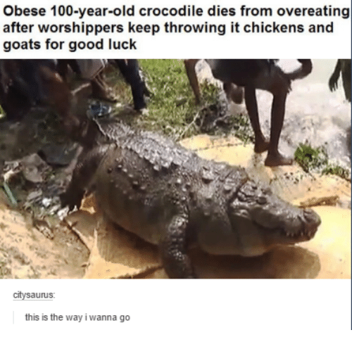 Goat, Chicken, and Good: obese 100-year-old crocodile dies from overeating  after worshippers keep throwing it chickens and  goats for good luck  auruS  this is the way i wanna go