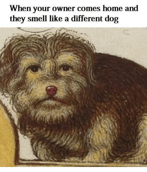When Your Owner Comes Home And They Smell Like A Different