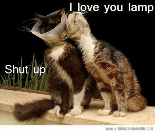 I Love You More Meme: 25+ Best Memes About Grumpy Cat And I Love You