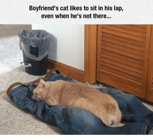 Cats, Grumpy Cat, and Boyfriend: Boyfriend's cat likes to sit in his lap,  even when he's not there...