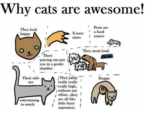 Funniness: Why cats are awesome!  Pests are  They look  a food  X-men  happy  source  claws  They arent loud  Their  purring can put  you in a gentle  slumber  They jump  T Floppy  Their tails  really really  are  really high,  I  without any  effort...they  are all like  I  entertaining  little funny  to watch  supermen
