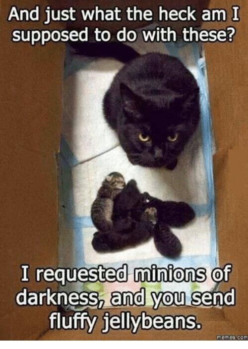 meme: And just what the heck am I  supposed to do with these?  I requested minions of  darkness, and you send  fluffy jellybeans.  memes com