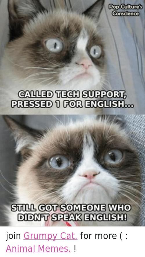 Animals, Anime, and Cats: Pop Culture's  Conscience  CALLED TECH SUPPORT.  PRESSED 1 FOR ENGLISH  STILL GOT SOMEONE WHO  DIDNT SPEAK ENGLISH! join Grumpy Cat. for more ( : Animal Memes. !