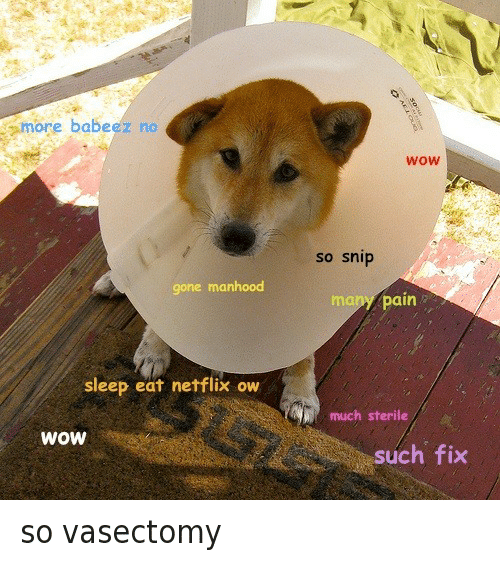 Doge, Netflix, and Wow: more babe  no  ez gone manhood  sleep eat netflix ow  WOW  WOW  so snip  many pain  much sterile  such fix so vasectomy