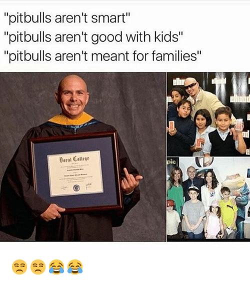 "puns: ""pitbulls aren't Smart""  ""pitbulls aren't good with kids""  ""pitbulls aren't meant for families"" 😒😒😂😂"