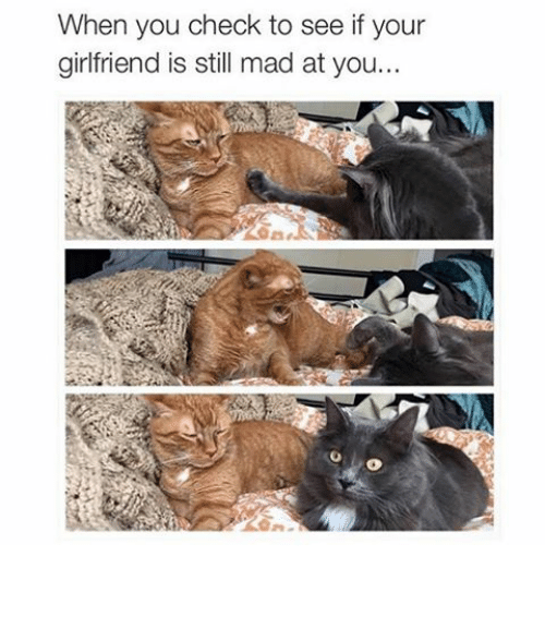 Funny: When you check to see if your  girlfriend is still mad at you... ⠀