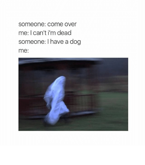 Dogs: Someone: Come over  me: I can't i'm dead  someone: I have a dog  me: ⁶𓅓