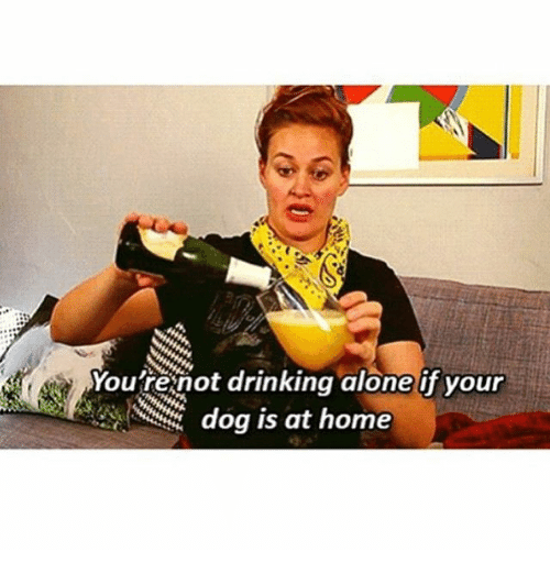 Funny Memes About Drinking Alone : You re not drinking alone if your dog is at home dogs