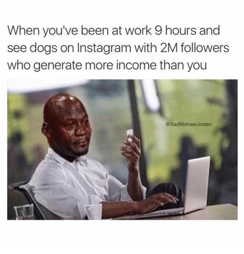 """Dogs, Finance, and Instagram: """"When you've been at Work 9 hours and See dogs On Instagram With 2M followers Who generate more income than you"""