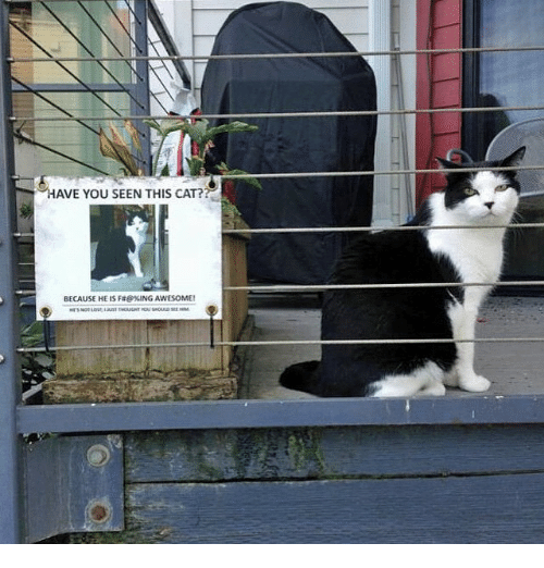 Funny: HAVE YOU SEEN THIS CAT?  BECAUSE HE IS Fae%ING AWESOME!
