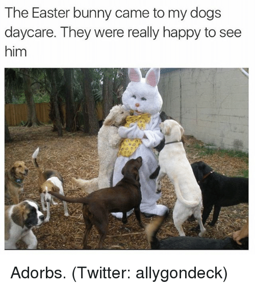 Image result for easter dog memes
