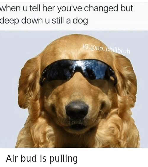 43 Funny Air Bud Memes Of 2016 On SIZZLE