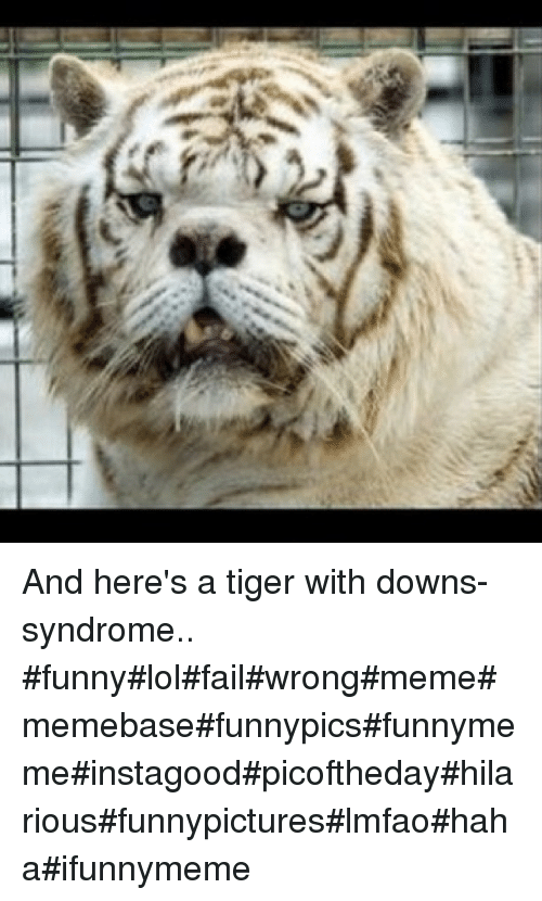 Fail, Funny, and Lol: And here's a tiger with downs- syndrome.. funnylolfailwrongmemememebasefunnypicsfunnymemeinstagoodpicofthedayhilariousfunnypictureslmfaohahaifunnymeme