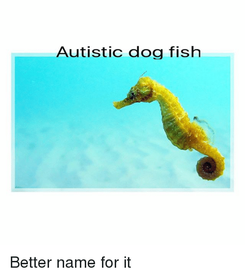 25 best memes about autistic dog autistic dog memes for Fish for dogs