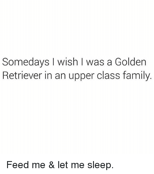 Upper Class Family: Somedays I wish I was a Golden  Retriever in an upper class family. Feed me & let me sleep.