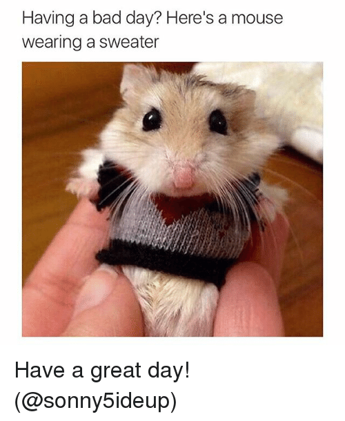 Funny Memes For Having A Bad Day : Having a bad day here s mouse wearing sweater have