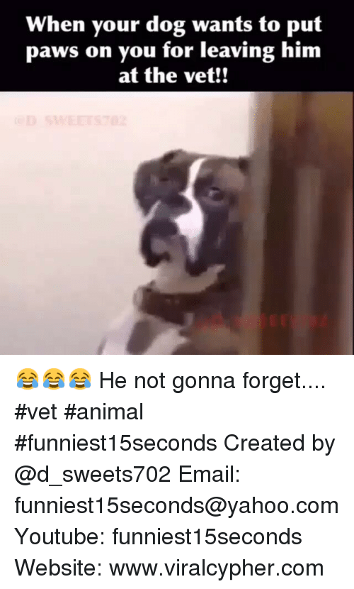 Dogs: When your dog wants to put  paws on you for leaving him  at the vet!! 😂😂😂 He not gonna forget.... vet animal funniest15seconds-Created by @d_sweets702-Email: funniest15seconds@yahoo.com-Youtube: funniest15seconds-Website: www.viralcypher.com