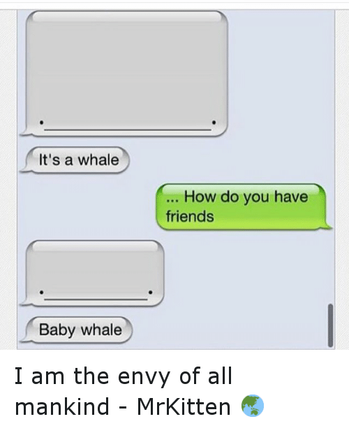 baby whale: It's a whale  Baby whale  How do you have  friends I am the envy of all mankind - MrKitten 🌏