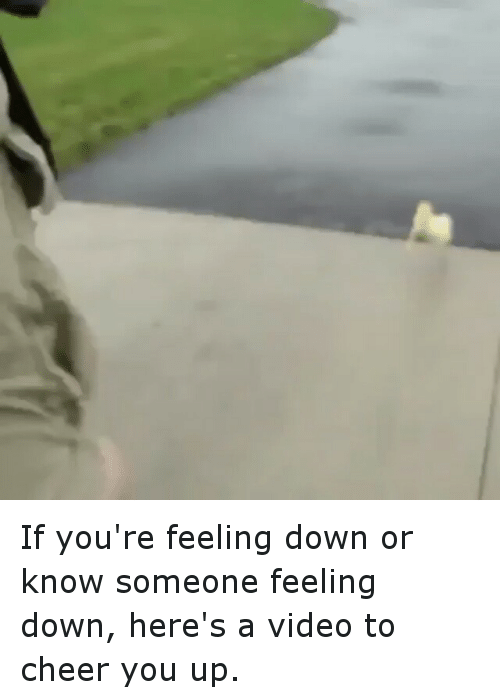 Funny Meme To Cheer Someone Up : If you re feeling down or know someone here s