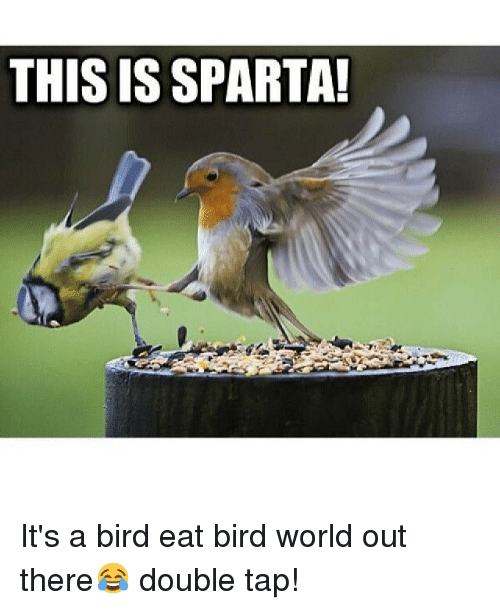 this is sparta it s a bird eat bird world out there