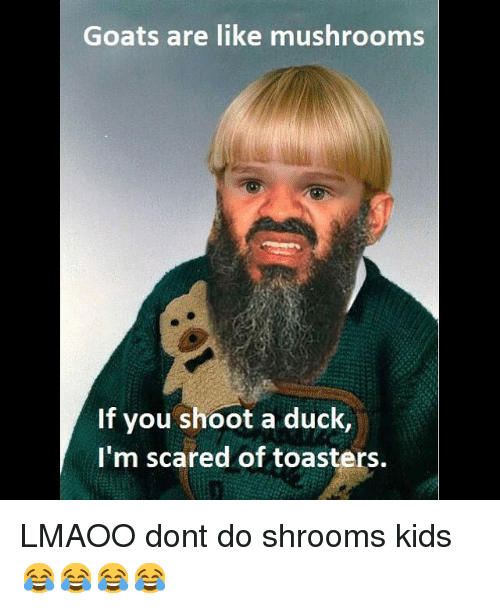 Funny, Memes, and Scare: Goats are like mushrooms  If you shoot a duck  I'm scared of toasters. LMAOO dont do shrooms kids 😂😂😂😂