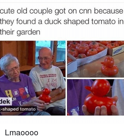 Cute, Funny, and Duck: cute old couple got on cnn because  they found a duck shaped tomato in  their garden  dek  -shaped tomato Lmaoooo