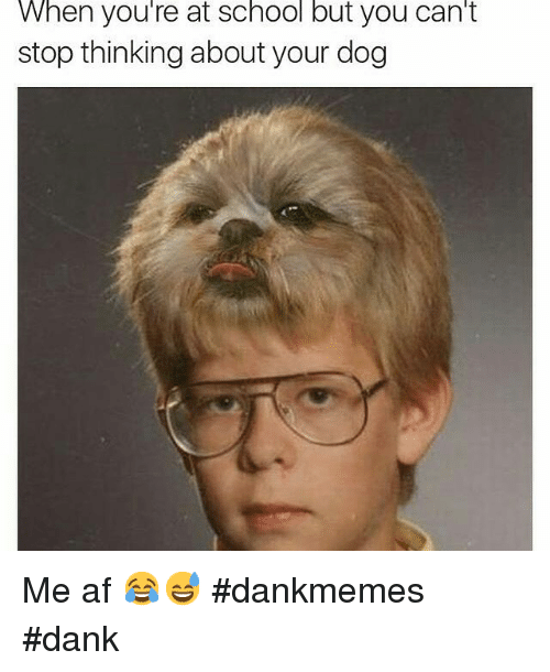 Af, Dank, and Dogs: When you're at School but you Can't  stop thinking about your dog Me af 😂😅 dankmemes dank