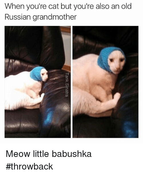 Instagram Meow little babushka throwback 70e6c7 when you're cat but you're also an old russian grandmother meow