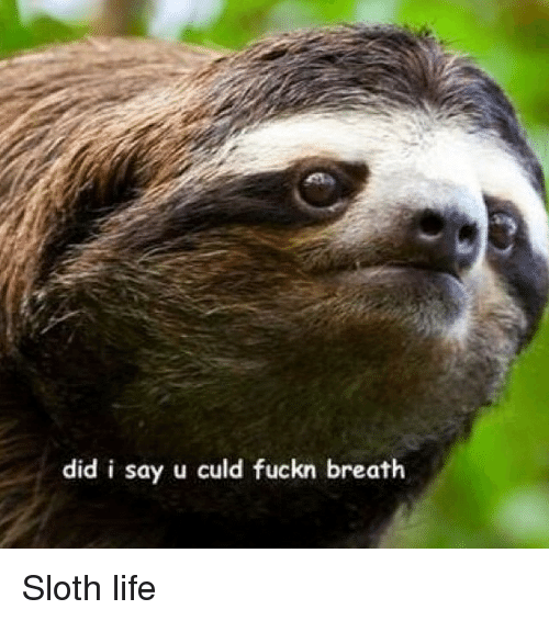Instagram Sloth life 482907 did i say u culd fuckn breath sloth life funny meme on sizzle