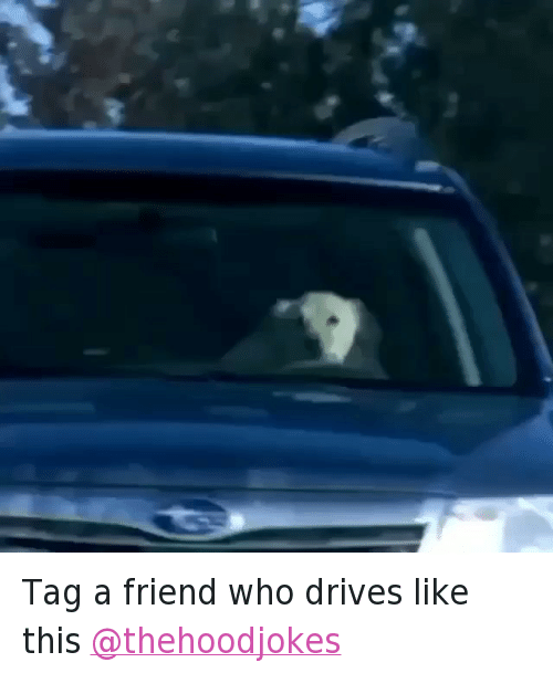 Animals, Dogs, and Driving: @mrstealyourmemes Tag a friend who drives like this @thehoodjokes