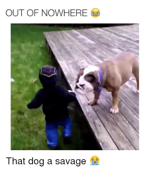 Dogs, Funny, and Memes: OUT OF NOWHERE That dog a savage 😭