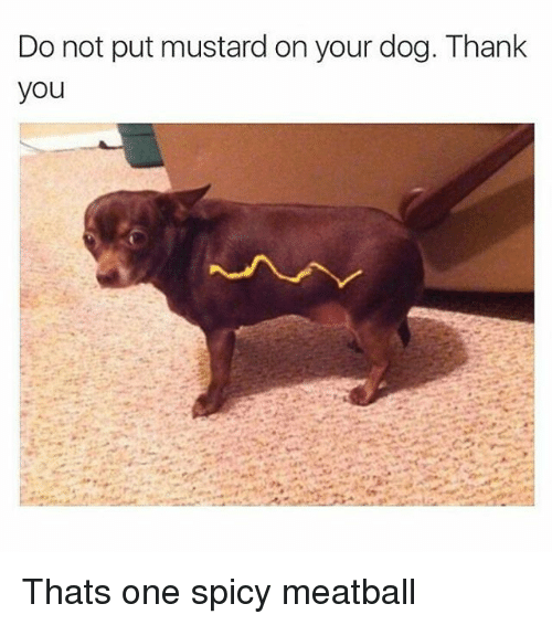 Instagram Thats one spicy meatball cc27a6 🔥 25 best memes about spicy, dogs, and dank memes spicy, dogs,Dank Memes Dog