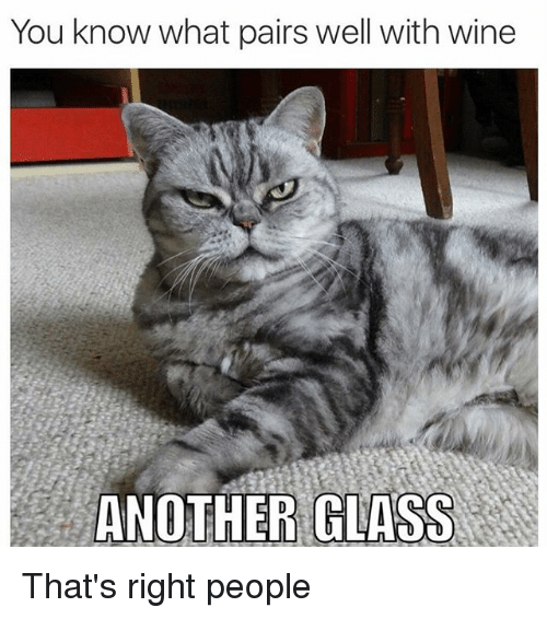 Cats, Wine, and Glasses: You know what pairs well with wine  ANOTHER GLASS That's right people