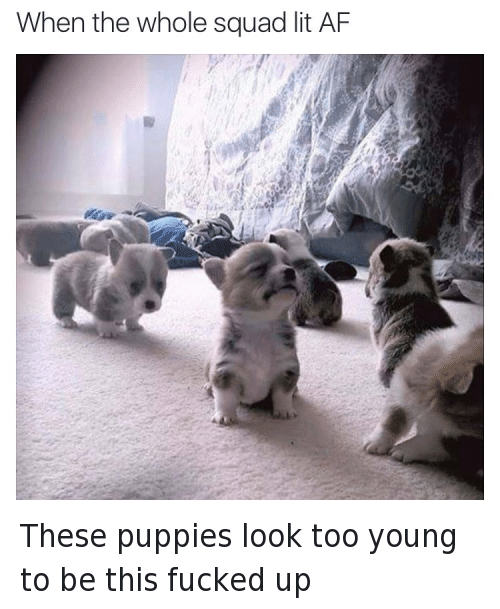 Af, Fucking, and It's Lit: When the Whole Squad lit AF These puppies look too young to be this fucked up