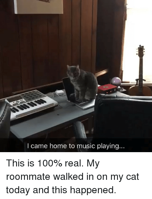 100 cats meowing songs in real life