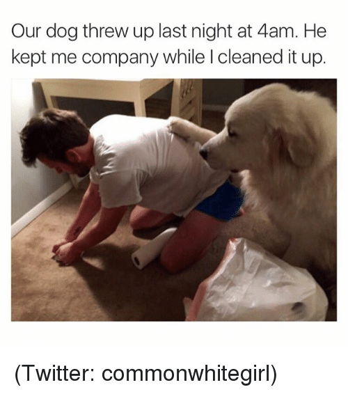Dogs, Funny, and Meme: Our dog threw up last night at 4am. He  kept me company while l cleaned it up. (Twitter: commonwhitegirl)