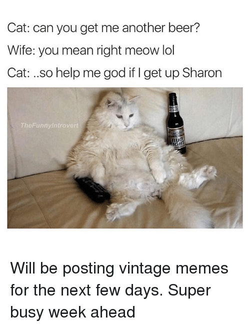Beer, Cats, and Funny: Cat: can you get me another beer?  Wife: you mean right meow lol  Cat: ..so help me god if get up Sharon  The Funny Introvert  BUD Will be posting vintage memes for the next few days. Super busy week ahead