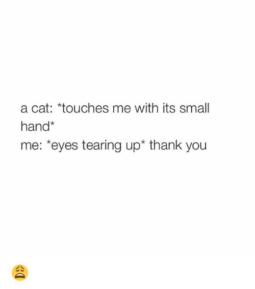 Small Hands: a cat: *touches me with its small  hand  me: *eyes tearing up thank you 😩