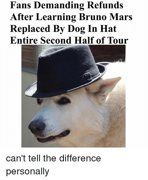 Bruno Mars, Dogs, and Funny: Fans Demanding Refunds  After Learning Bruno Mars  Replaced By Dog In Hat  Entire Second Half of Tour can't tell the difference personally