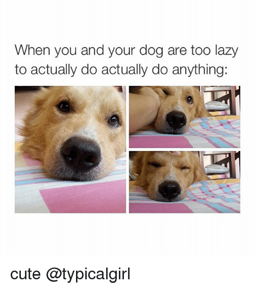Cute, Dogs, and Lazy: When you and your dog are too lazy  to actually do actually do anything cute @typicalgirl
